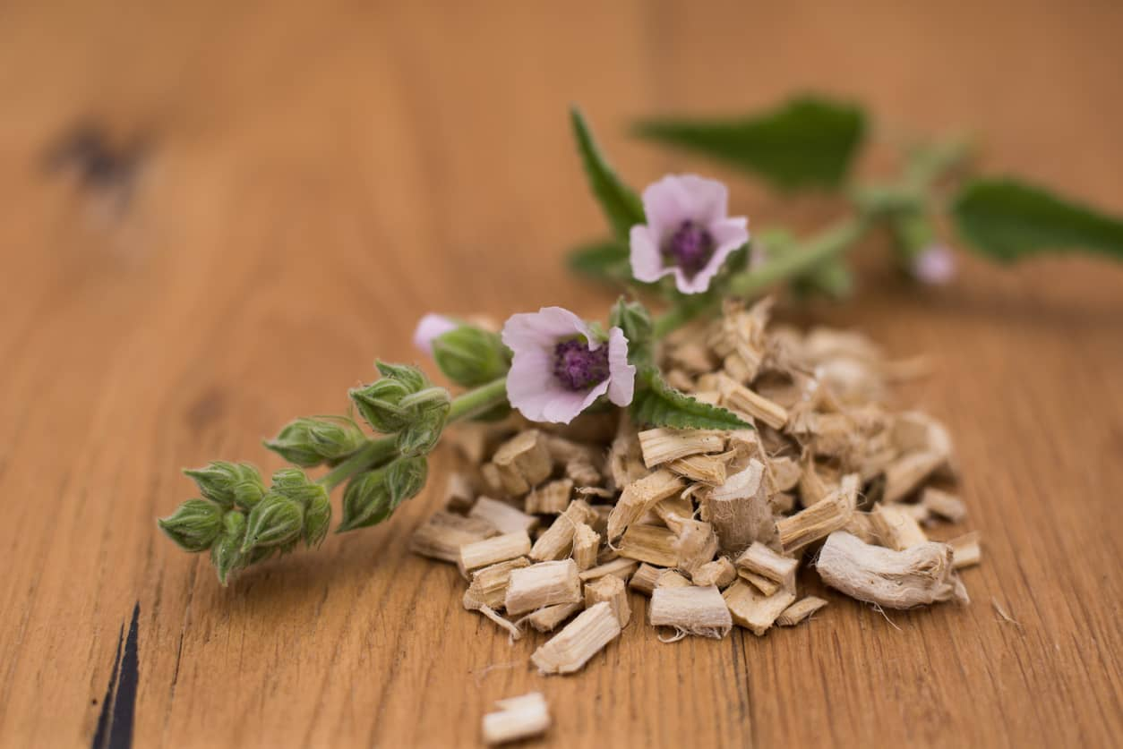 Organic Marshmallow Root Benefits