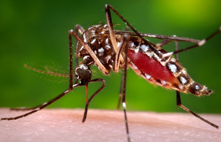 Caution: DEET Based Insect Repellent Side-Effects